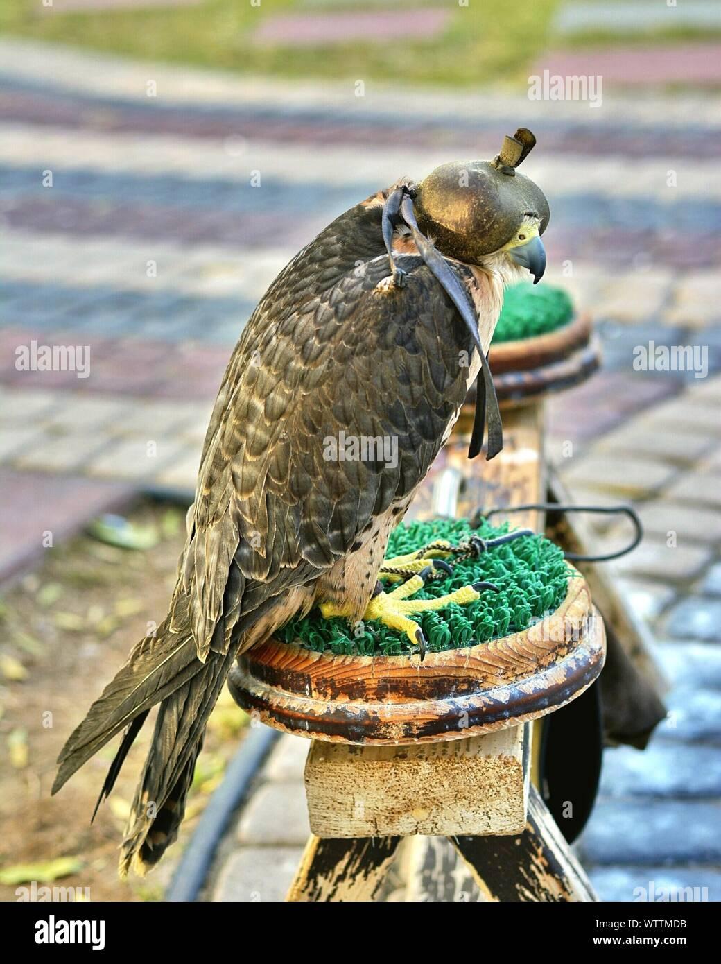 abigail hawk bra size