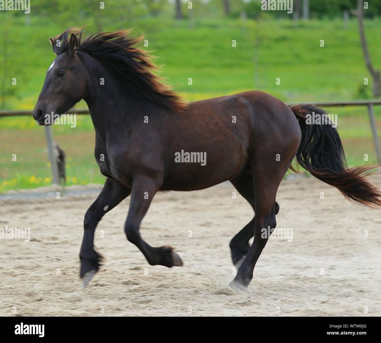 Side View Of Brown Horse Running In Ranch Stock Photo Alamy