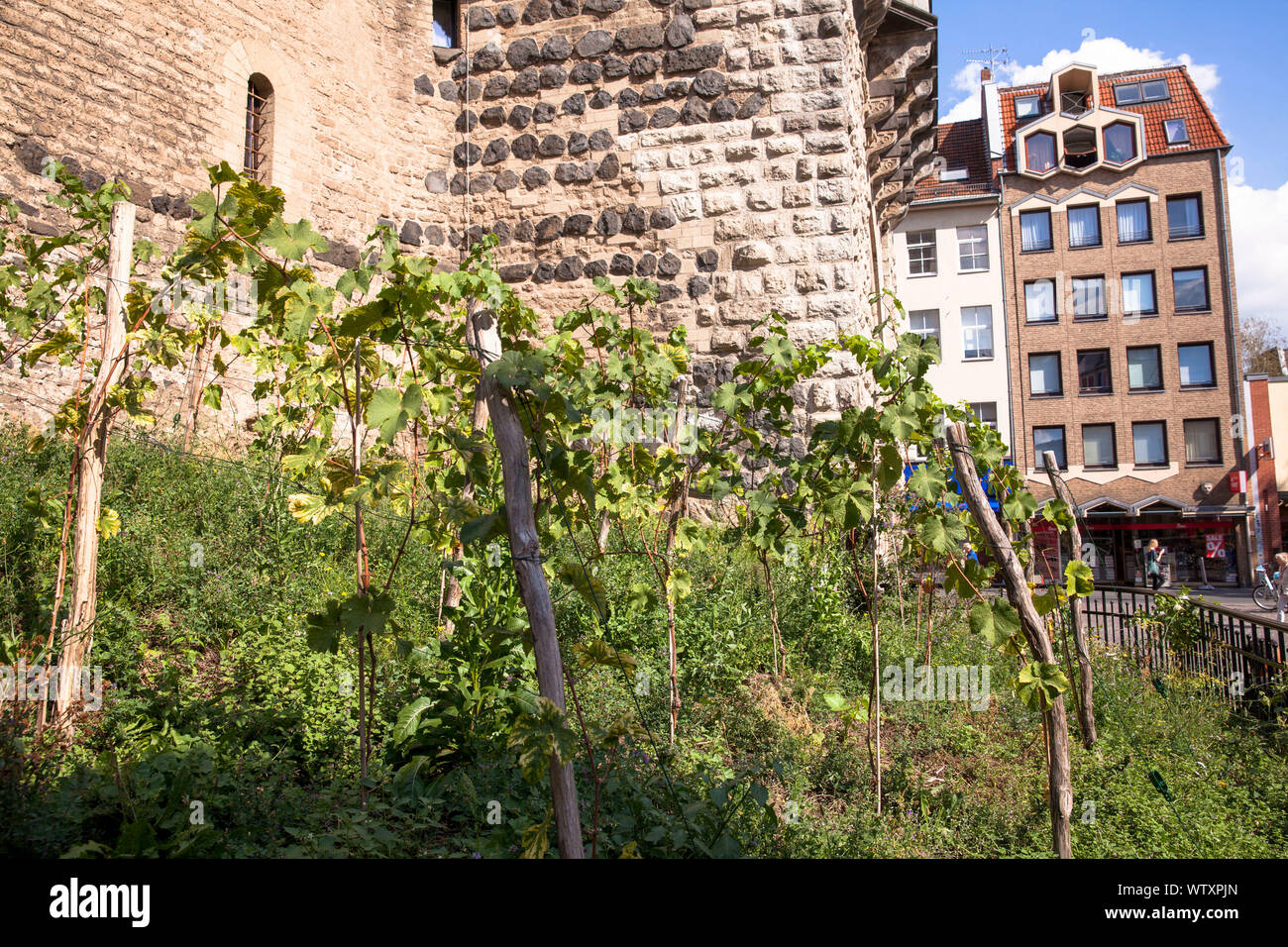 grapevine at the historic town gate Severinstorburg at the Chlodwig square in the south part of the town, Cologne, Germany.  Weinreben an der Severins Stock Photo