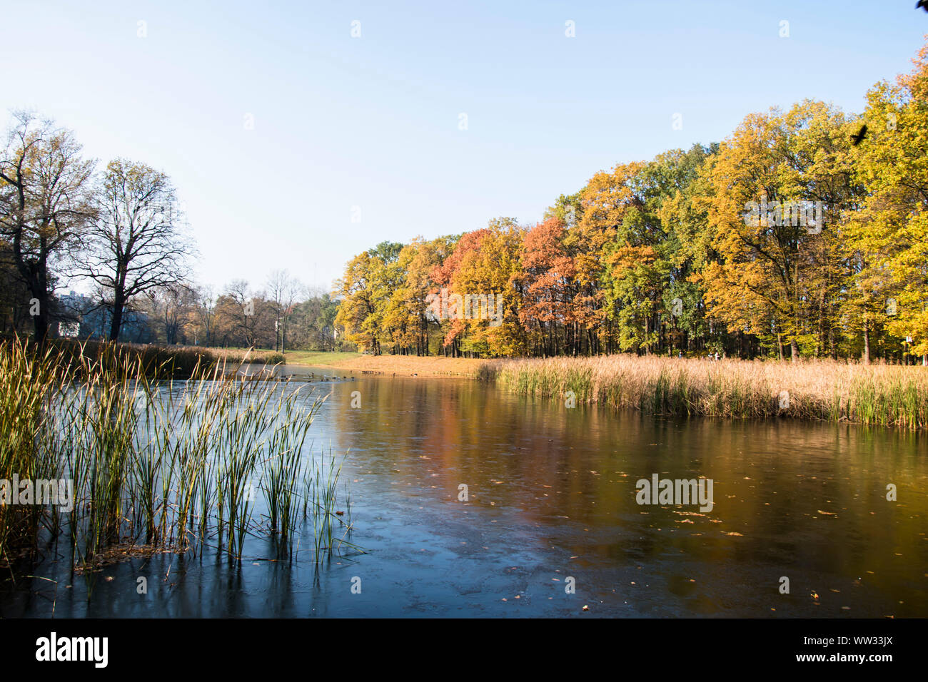 lake pond and tree in the park photo Beautiful picture