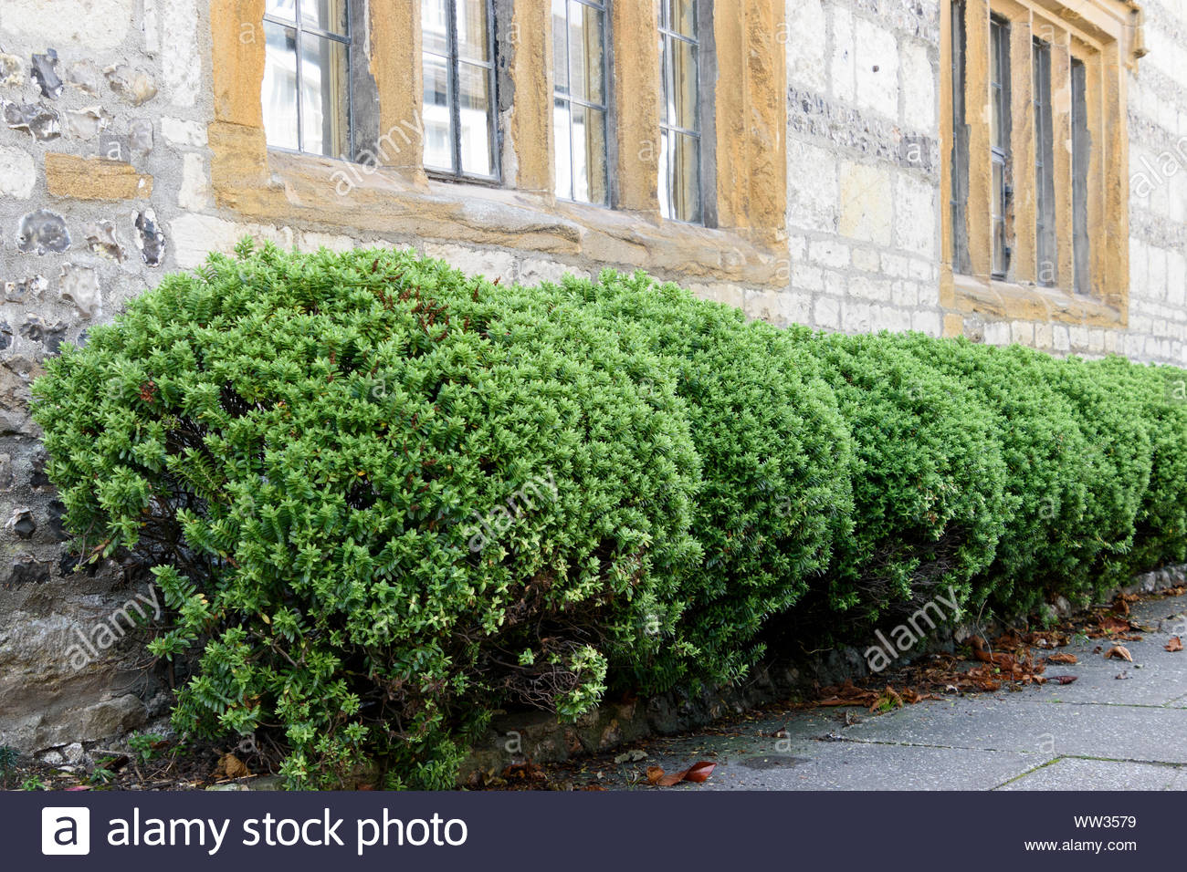 Small Front Garden With Under Window Hedge England Uk Stock