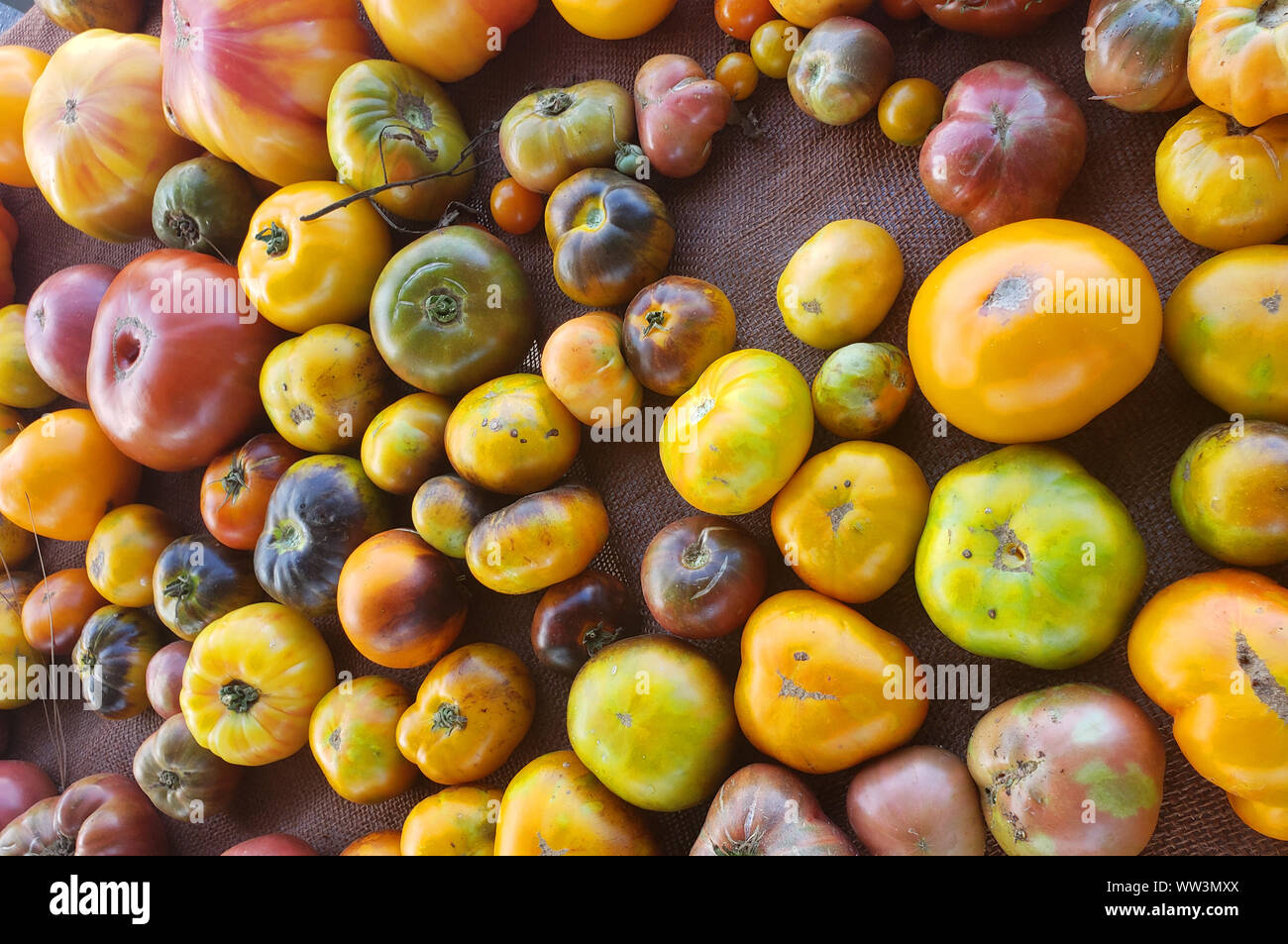 Colorful tomatoes yellow, green and red laying on a tarp on an open farmers market Stock Photo
