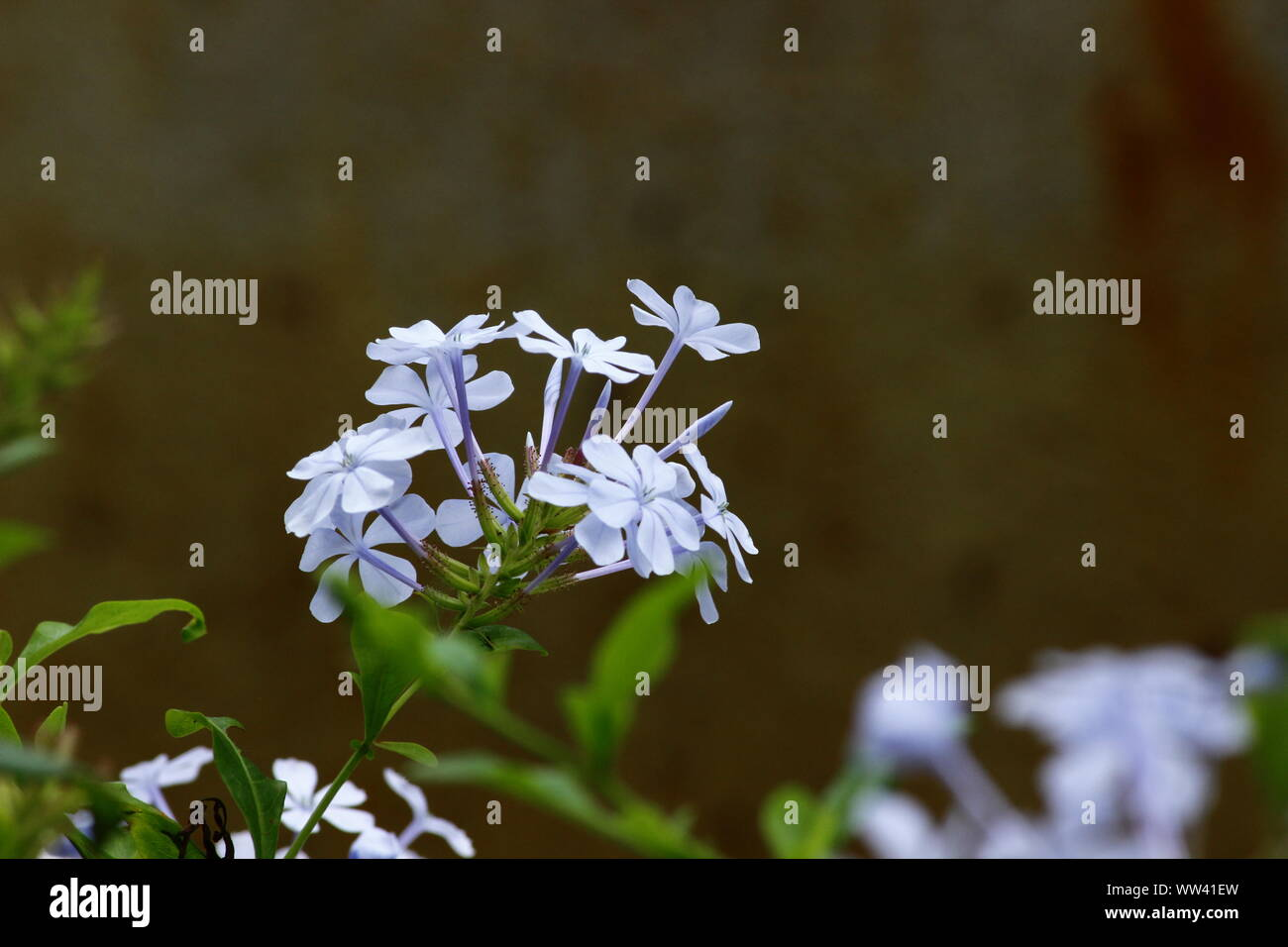 WHITE BEAUTY IN NATURE Stock Photo