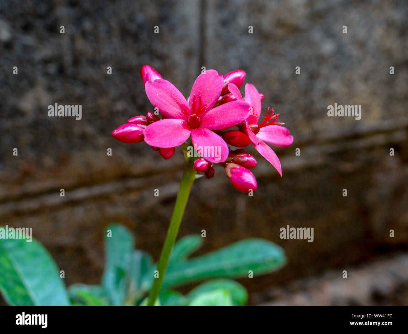 TINY RED FLOWERS Stock Photo