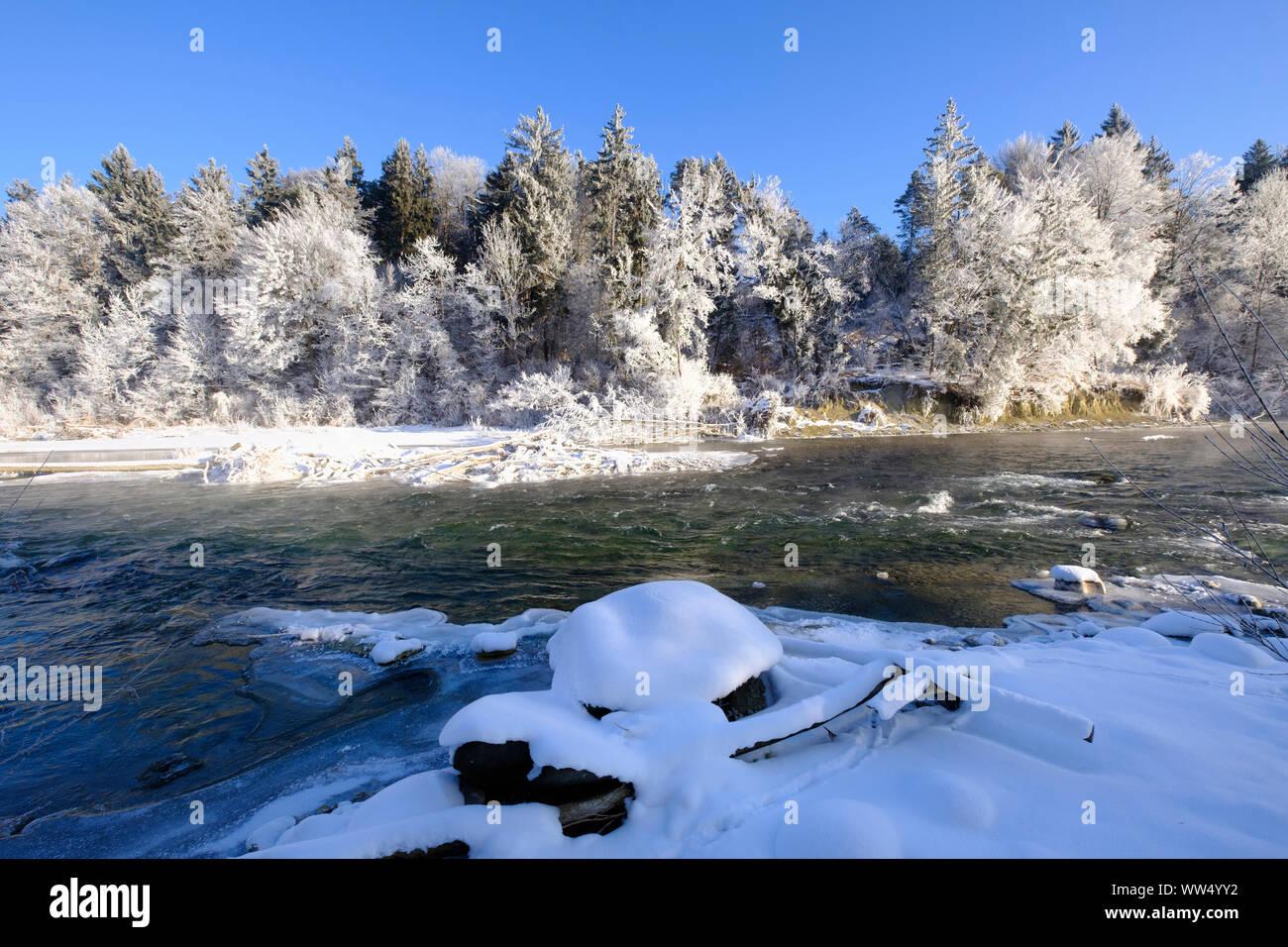 iced up riverside, hoarfrost in trees, Isar, nature reserve Isarauen, Geretsried, Upper Bavaria, Bavaria, Germany Stock Photo