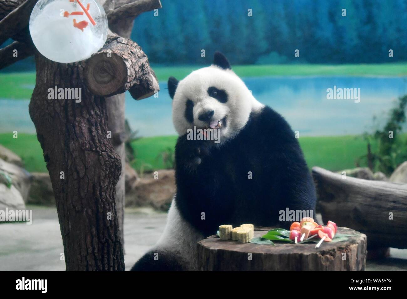 Taipei's Taiwan. 13th Sep, 2019. Giant panda Yuanzai eats skewered fruits and vegetables at Taipei Zoo in Taipei, southeast China's Taiwan, Sept. 13, 2019. Mooncakes and skewered fruits and vegetables were specially made by the staff of Taipei Zoo for giant pandas to celebrate the the Mid-Autumn Festival. Credit: Chen Bin/Xinhua/Alamy Live News Stock Photo