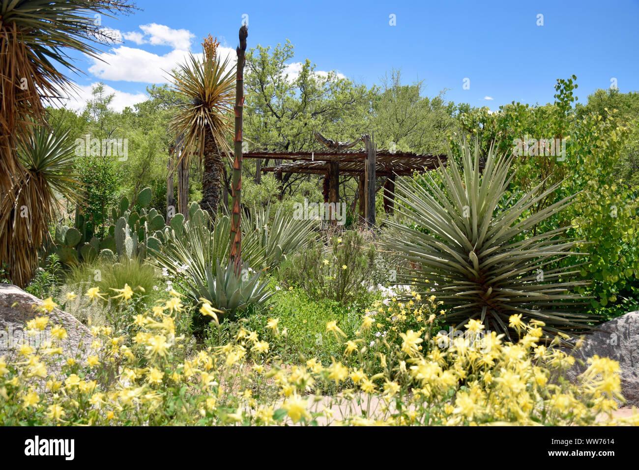 High Desert Garden Stock Photos High Desert Garden Stock Images