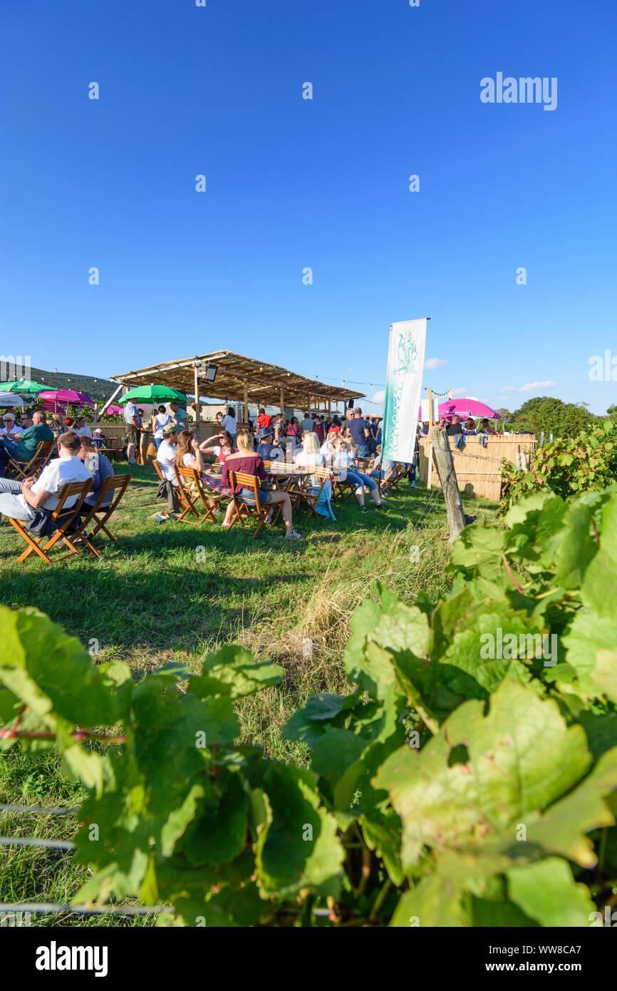Pfaffstätten, vineyard, bar at festival 'Genussmeile' along 1st Vienna water line hiking path, winegrowing enterprises with own bars, visitors, Wienerwald, Vienna Woods, Lower Austria, Austria Stock Photo