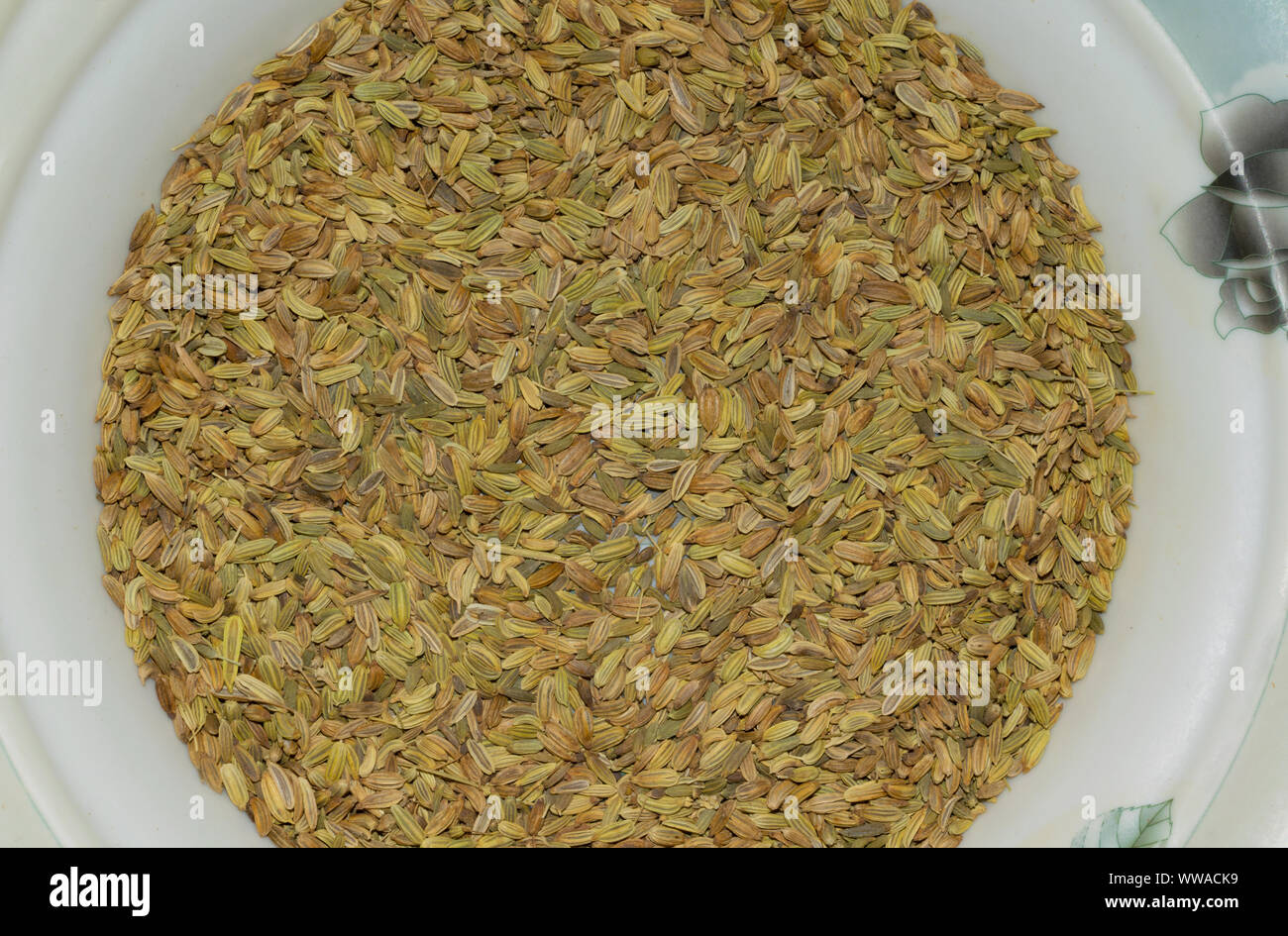 close up of dried fennel seeds in a white plate,top view.pile of dry fennel seeds in a plate. Stock Photo