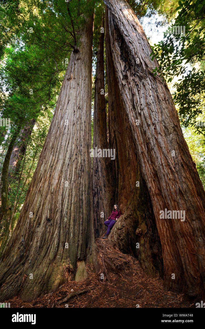 A woman inside a giant Sequoia and redwood trees, some of the largest trees on earth, along the California Coast at the Redwoods National and state pa Stock Photo