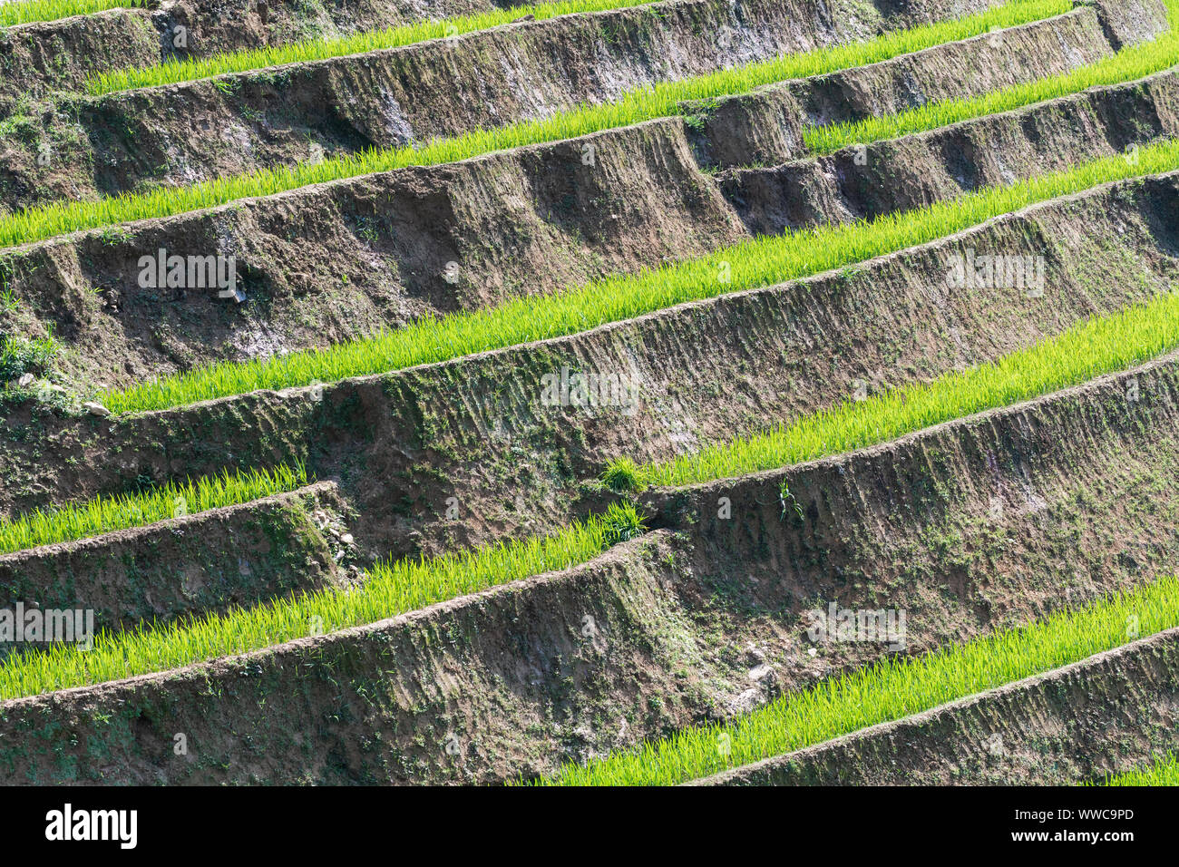 Background pattern of Sapa rice terraces in Lao Cai province, Vietnam. Stock Photo