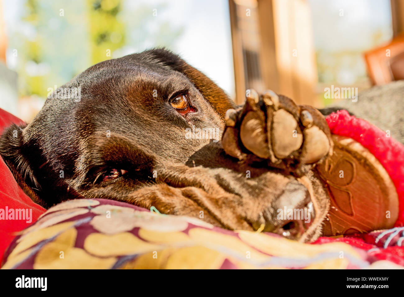 Sad dog's face in the morning sunlight Stock Photo
