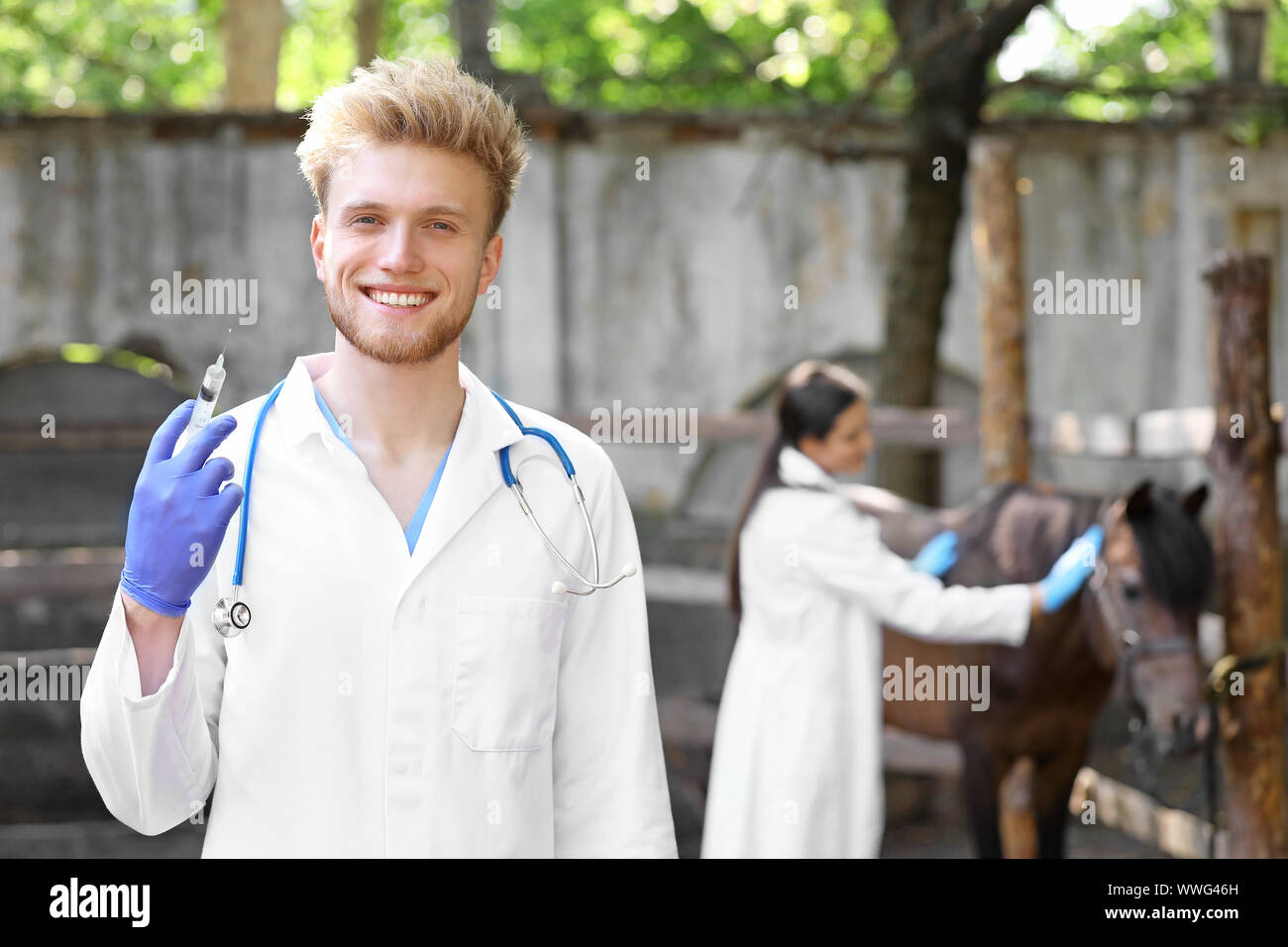 Veterinarian going to vaccinate horse on farm Stock Photo