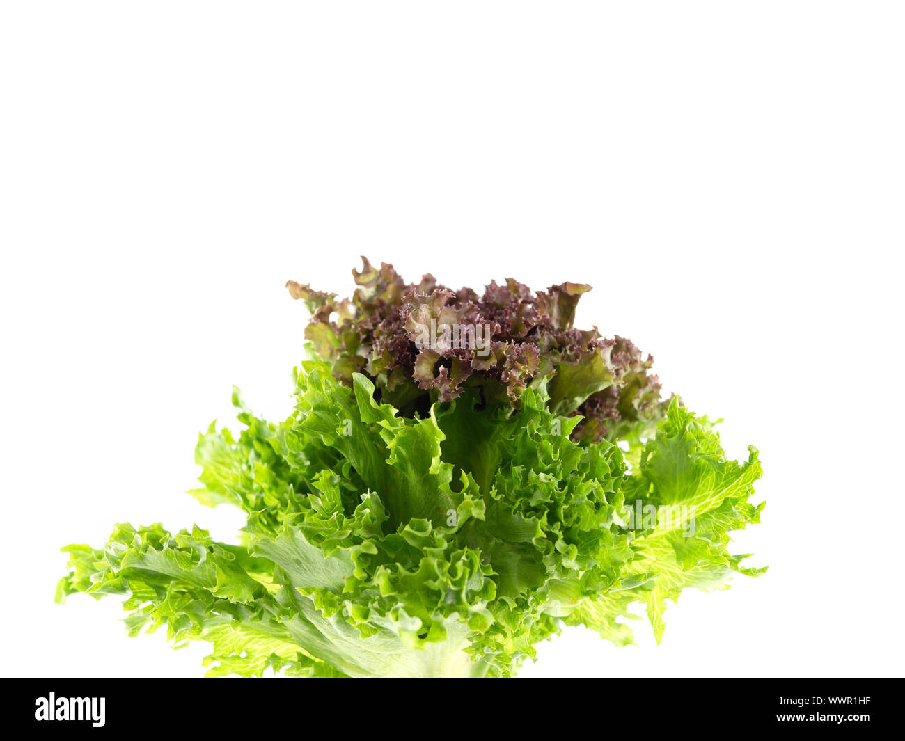 Salad leaf. Lettuce isolated on white background, Fresh and green lettuce, Salad background for inserting text Stock Photo