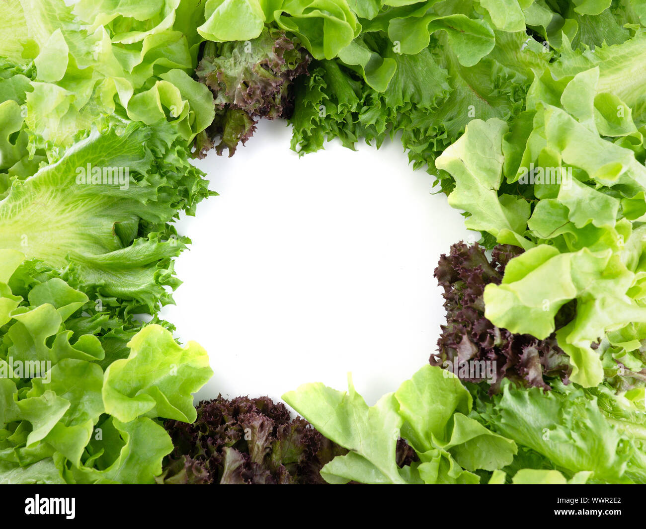 Salad leaf. Lettuce isolated on white background, Salad background for inserting text Stock Photo