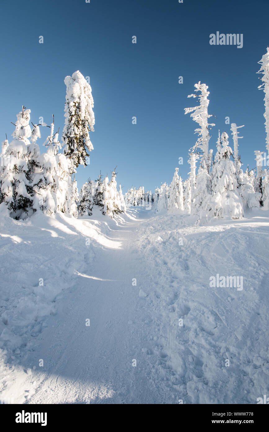 snow covered hiking trail with frozen trees around and clear sky bellow Lysa hora hill in Moravskoslezske Beskydy mountains in Czech republic during f Stock Photo