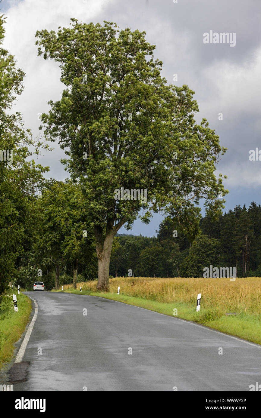Country road in the Harz Mountains Stock Photo