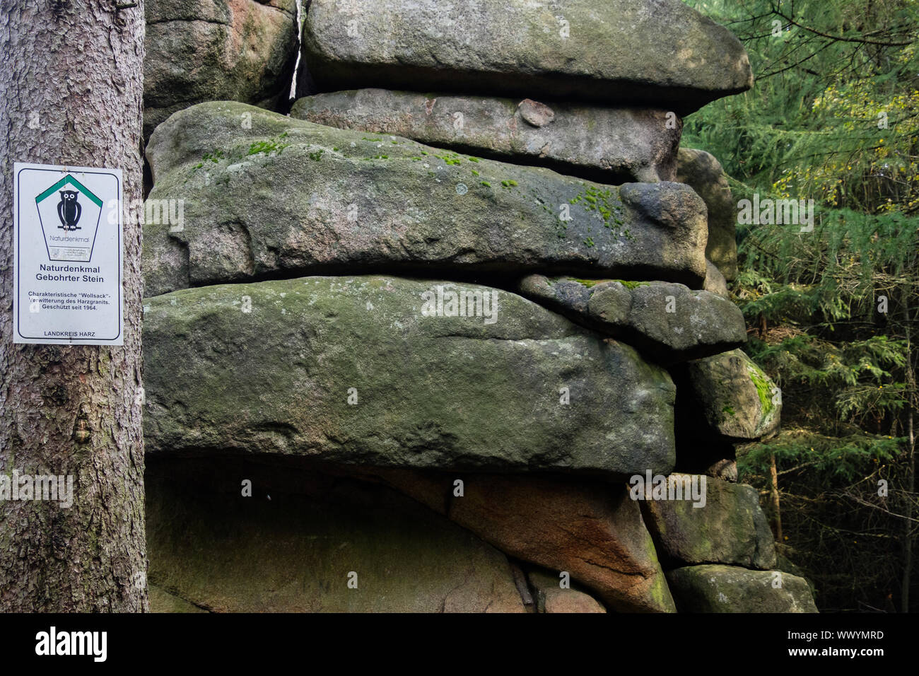 Stone drilled in the Harz National Park in autumn Stock Photo