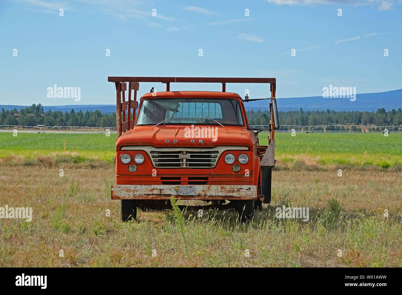 A 1965 Dodge 300 truck sitting in a farm field after being abandoned by the farmer who owns it. Stock Photo