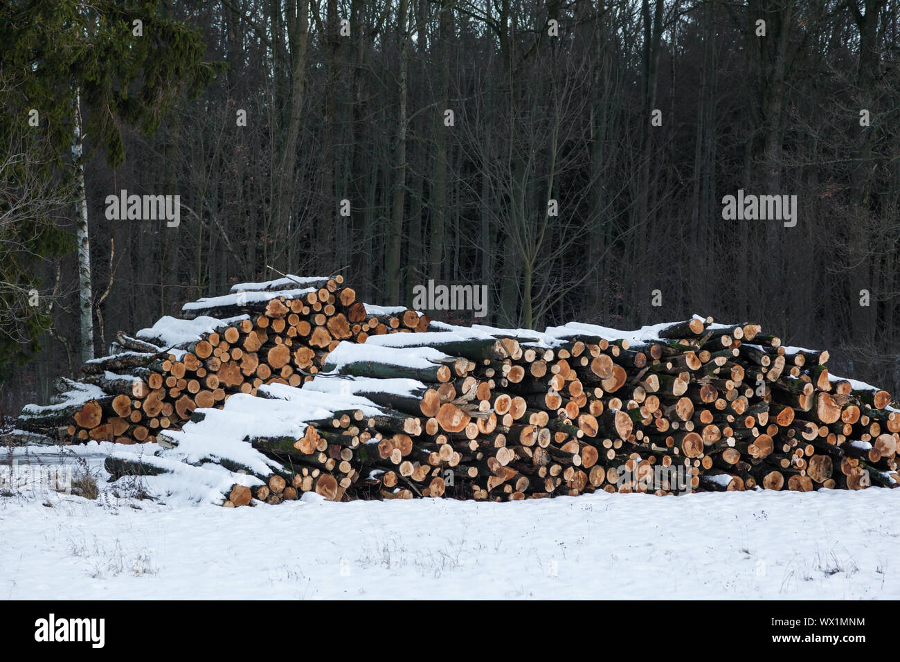 Wooden poles in winter Stock Photo