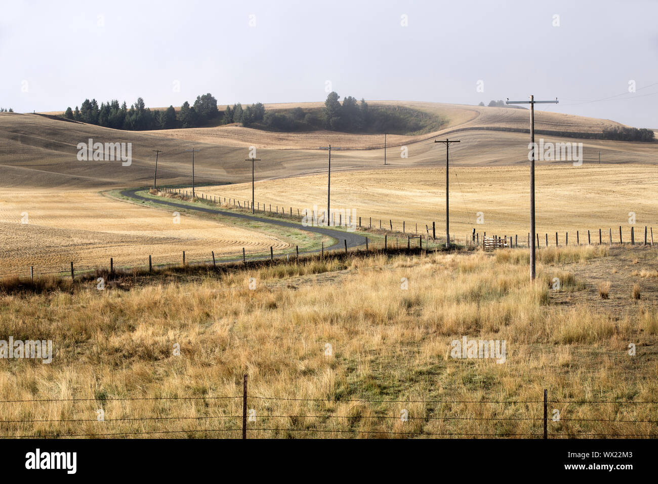 A winding country road cutting through the landscape of the palouse region in eastern Washington. Stock Photo