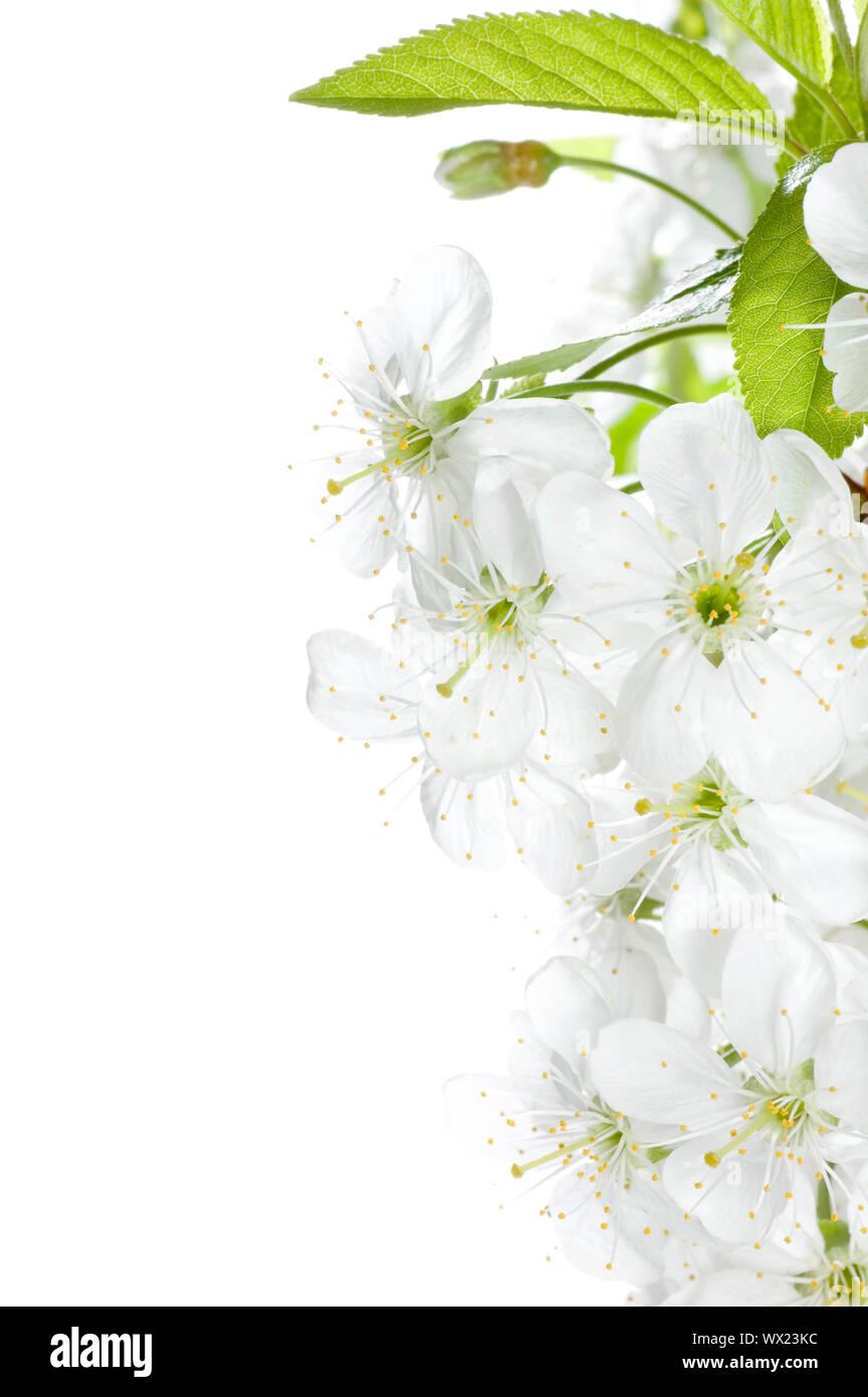 Spring Blossoms Border Stock Photo