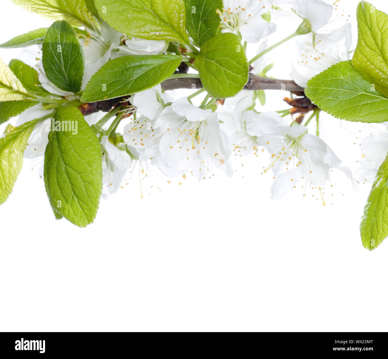 Beautiful Blossoms Border Stock Photo