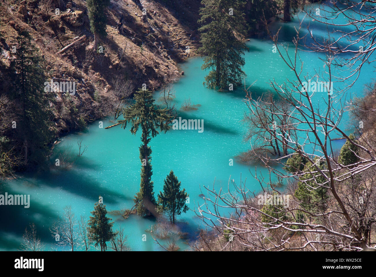 Himalayan firs and Himalayan spruce in lake. Flooded forest Stock Photo