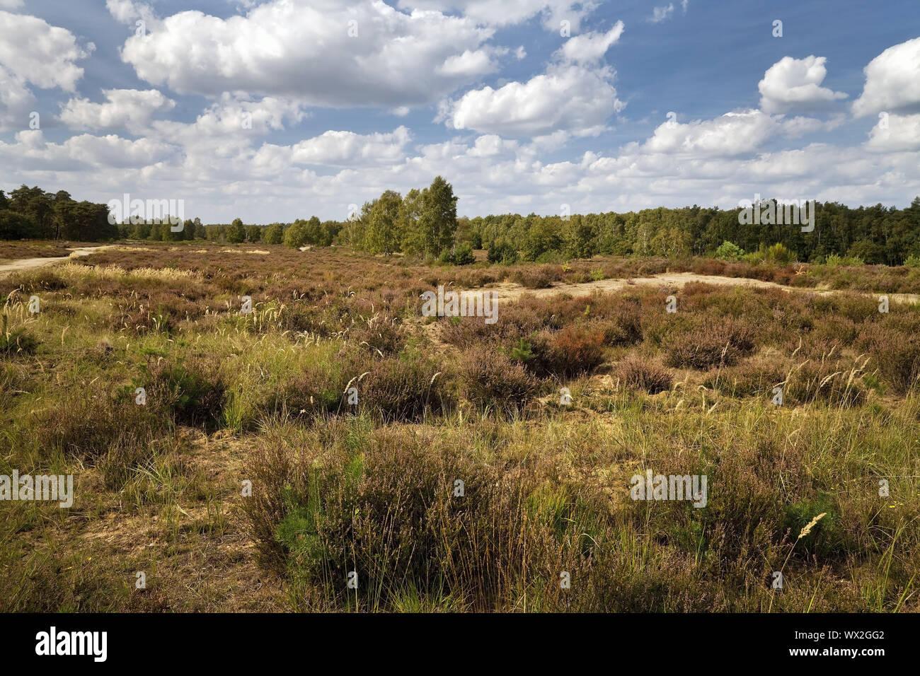 heathland, nature reserve Wahner Heide, Troisdorf, North Rhine-Westphalia, Germany, Europe Stock Photo
