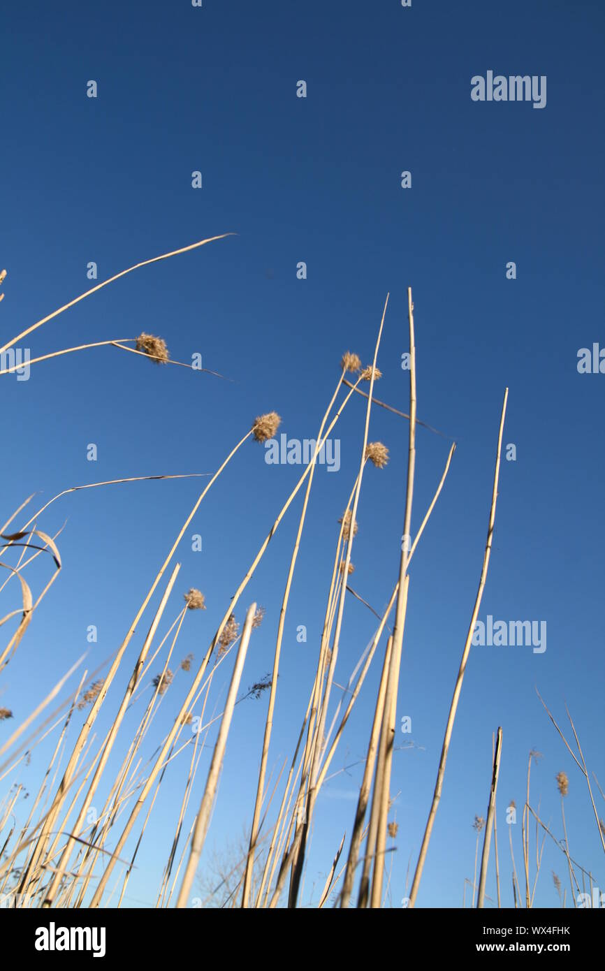 plants in blue sky nature Stock Photo