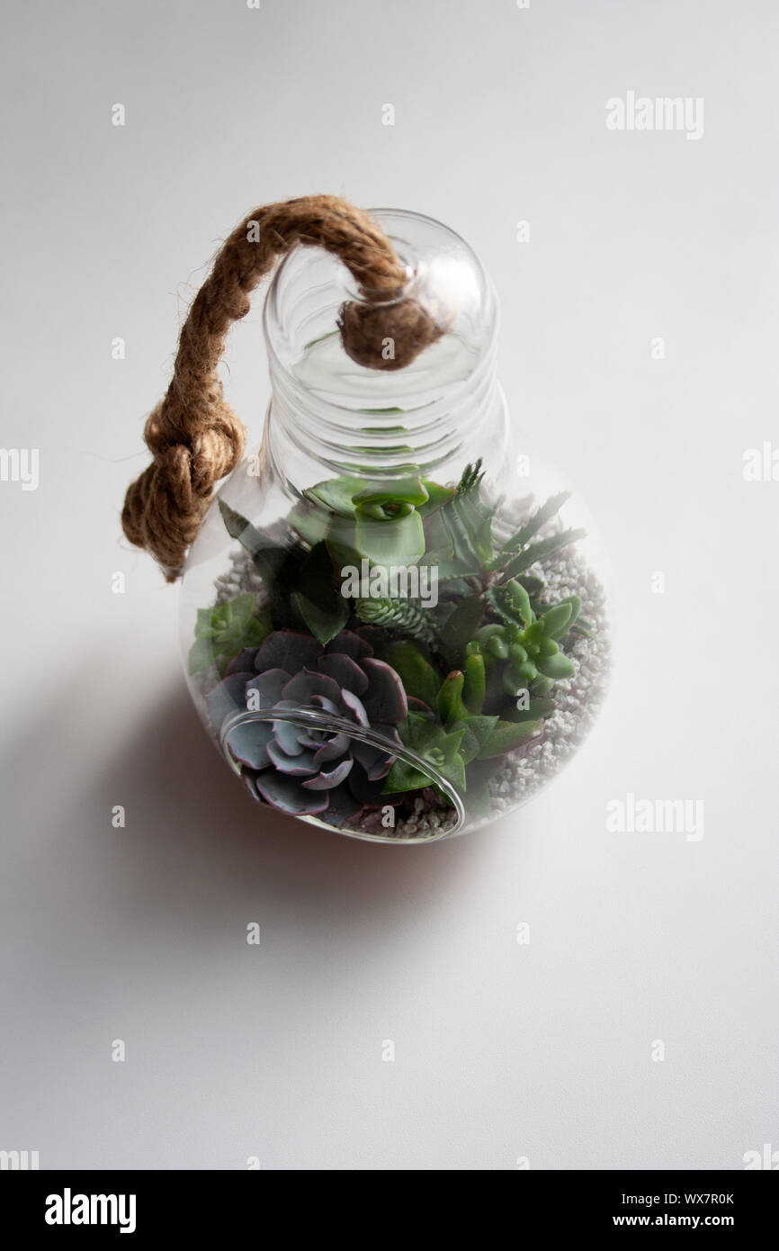 Succulents Garden In Glass Light Bulb Terrarium With Cable Knot Isolated On White Background Stock Photo Alamy