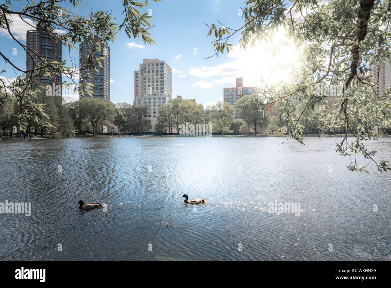 A shot of Central Park during a beautiful sunny day, with buildings reflecting into the water of a lake. New York City, United States Stock Photo