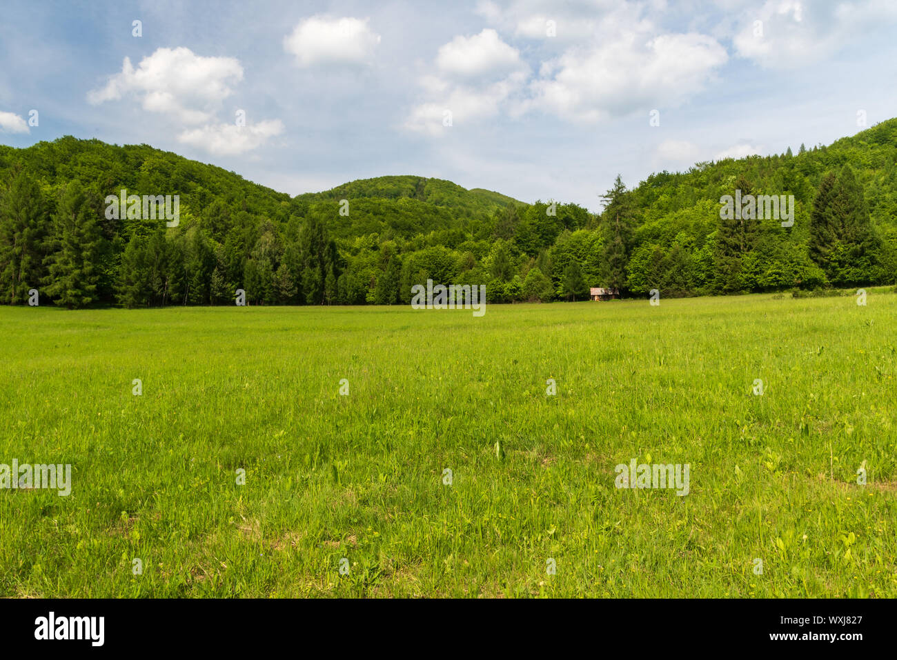 springtime Velka Fatra mountains scenery with meadow and hills covered by deep forest above Krpelany village in Slovakia Stock Photo