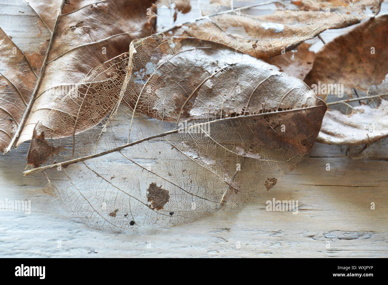 Dry Brown Leaf Decompose Structure On Wooden Board Stock Photo Alamy