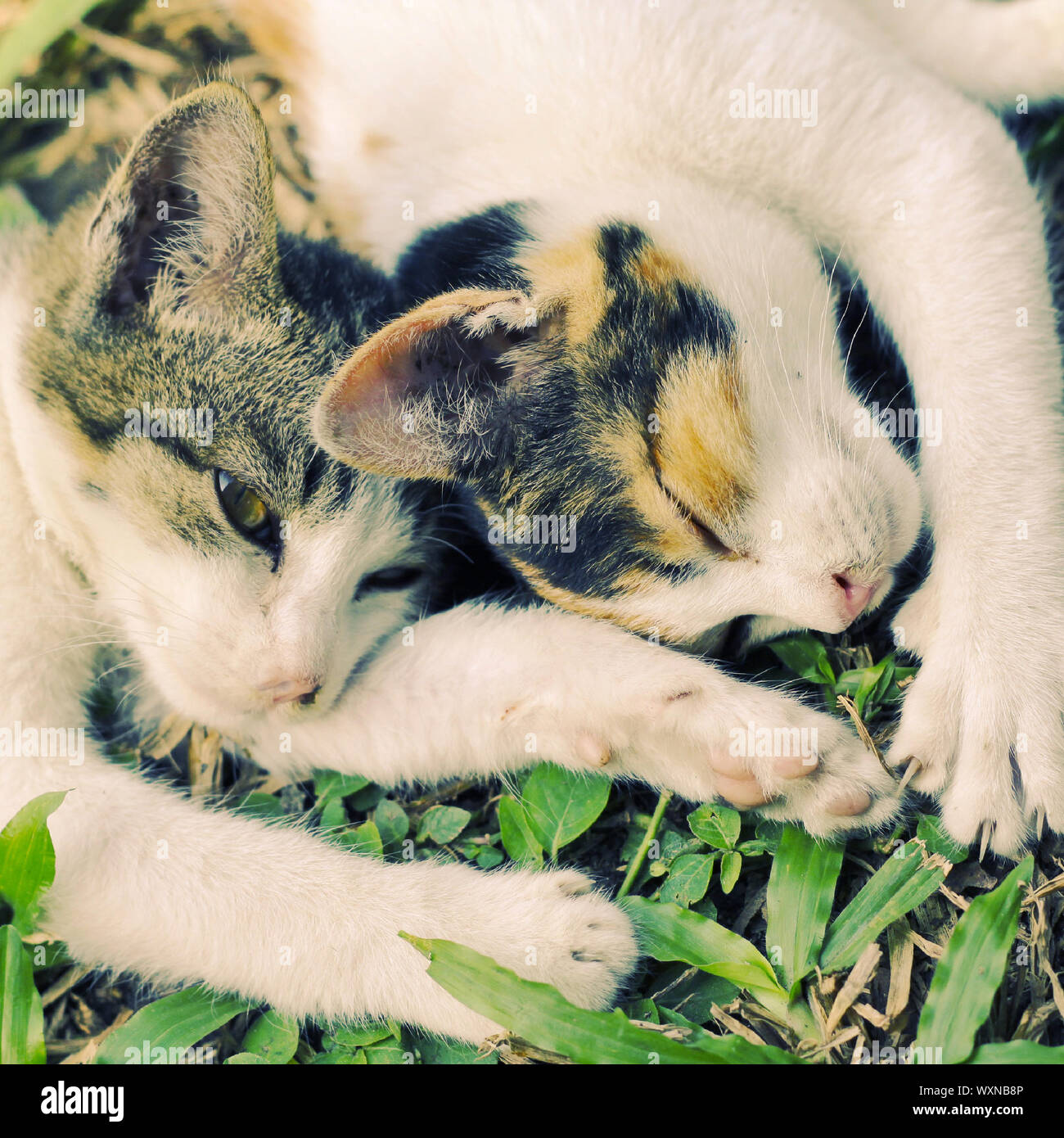 Two Kitties High Resolution Stock Photography And Images Alamy