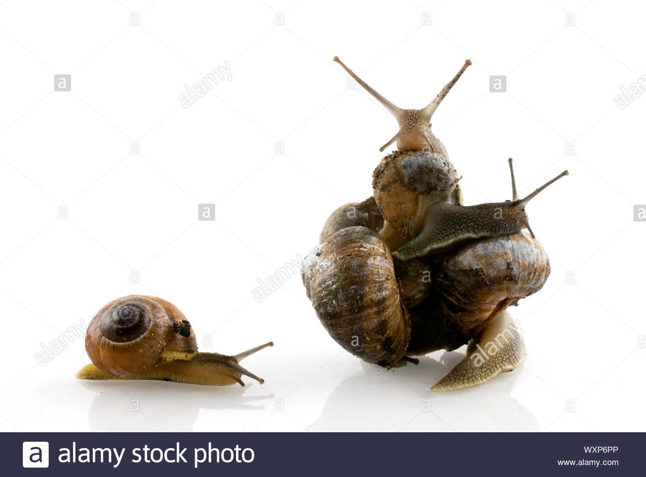 one snail cannot join them, and leave alone Stock Photo