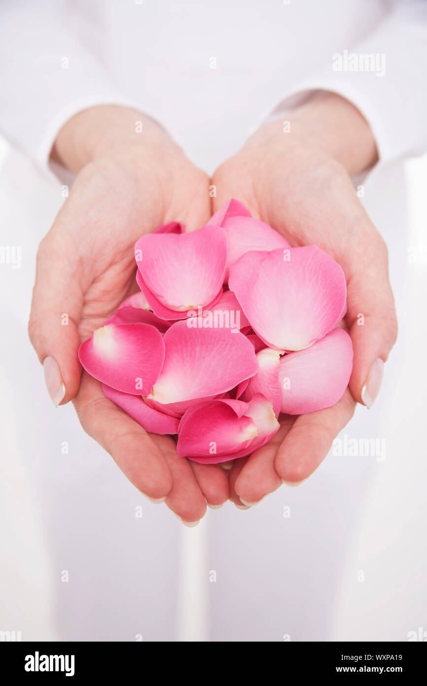 Closeup midsection of a woman holding hands full of petals against white background Stock Photo