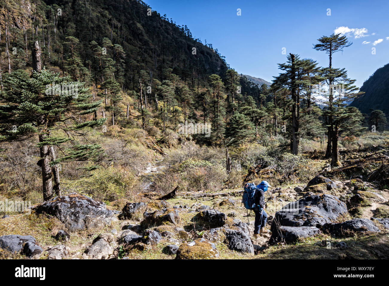Trekker near Maurothang camp, Wangdue Phodrang district, Snowman Trek, Bhutan Stock Photo