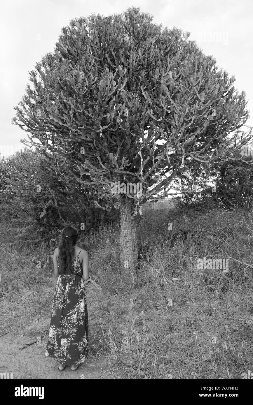 Black and white picture of young woman looking the huge cactus in the archeological park of Bagan in Myanmar Stock Photo