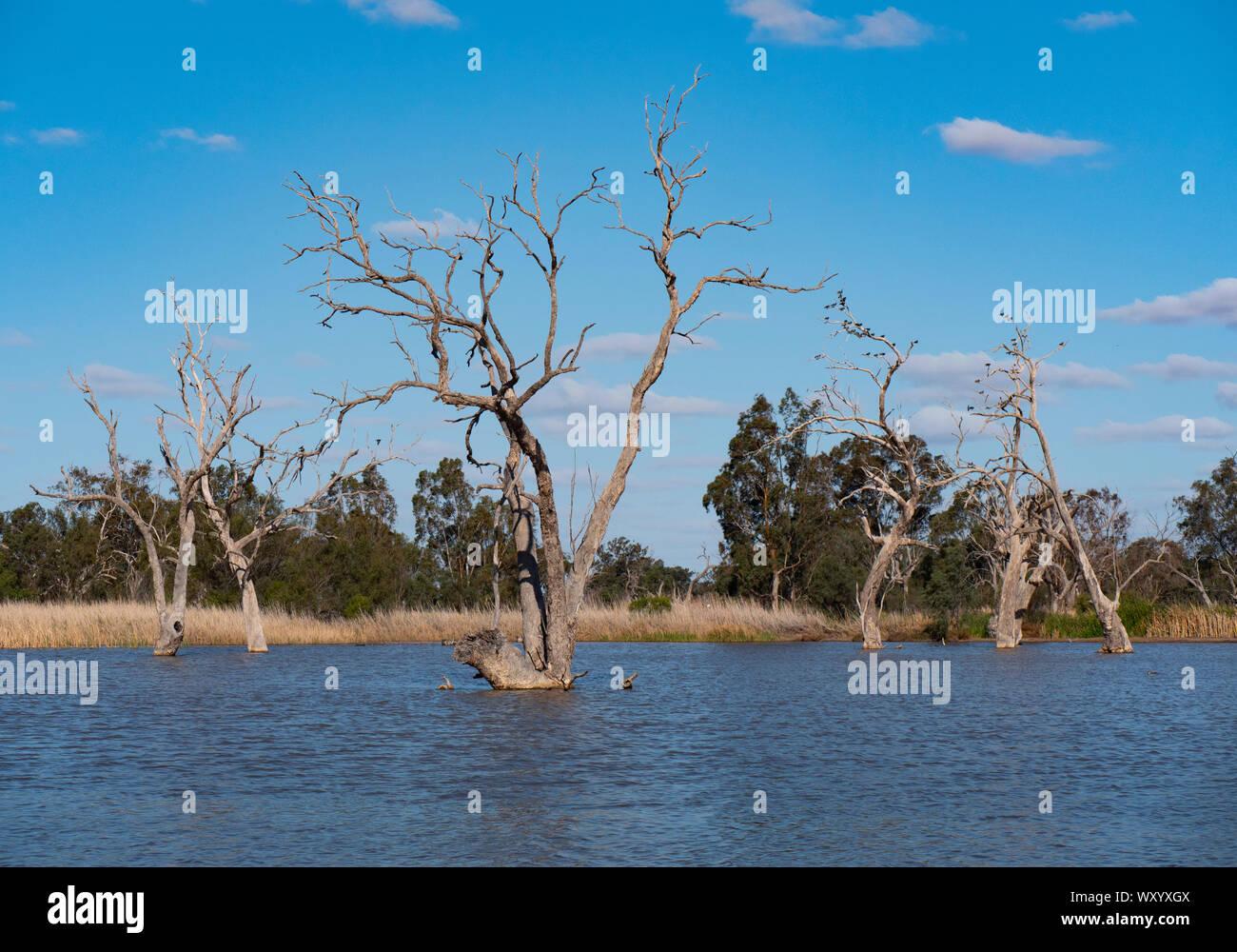 Wetland bird habitat at Warren New South Wales Australia. A popular destination from Naromine and Dubbo. Stock Photo