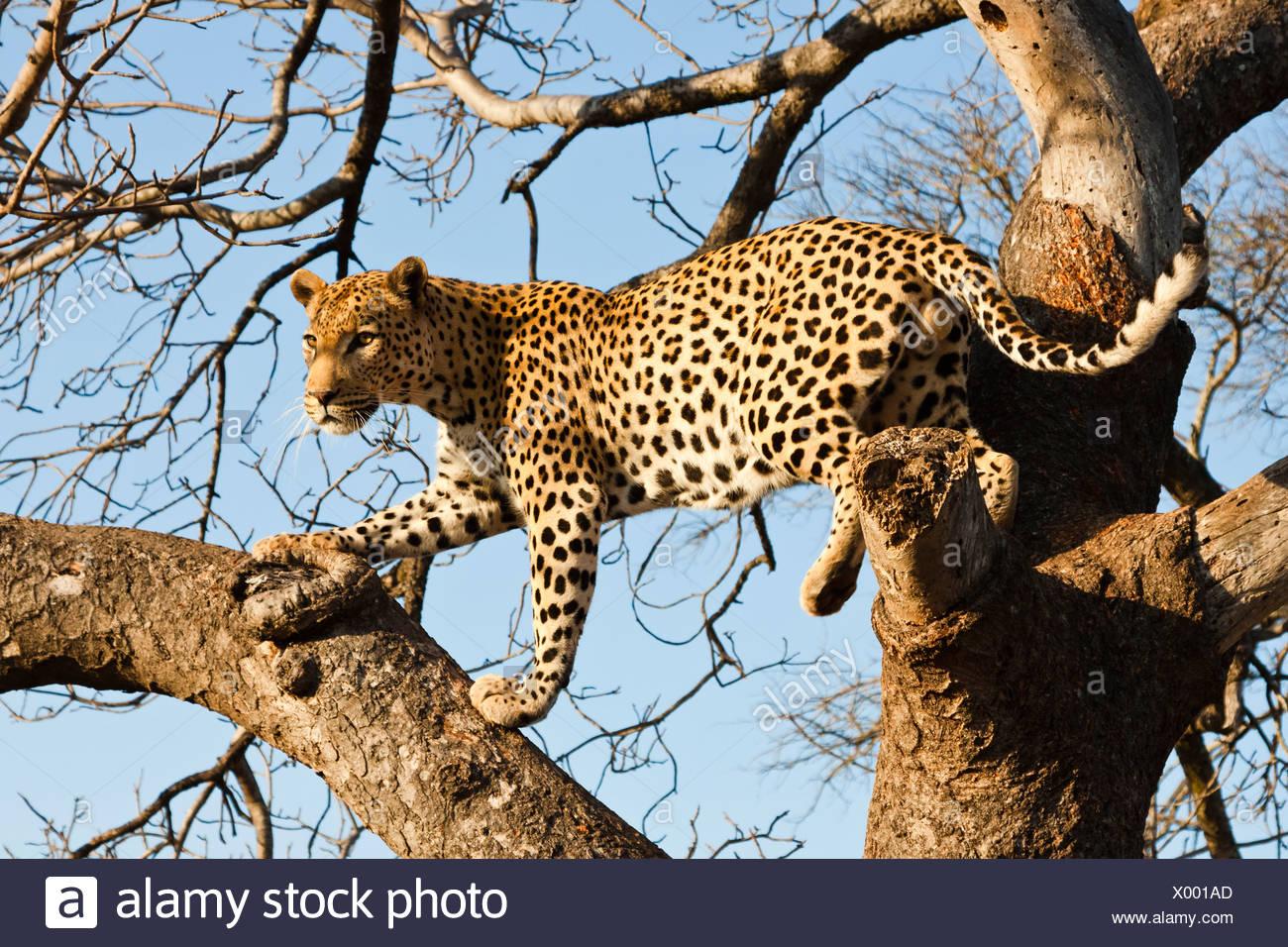 Kruger Park Lodge Stock Photos & Kruger Park Lodge Stock ...