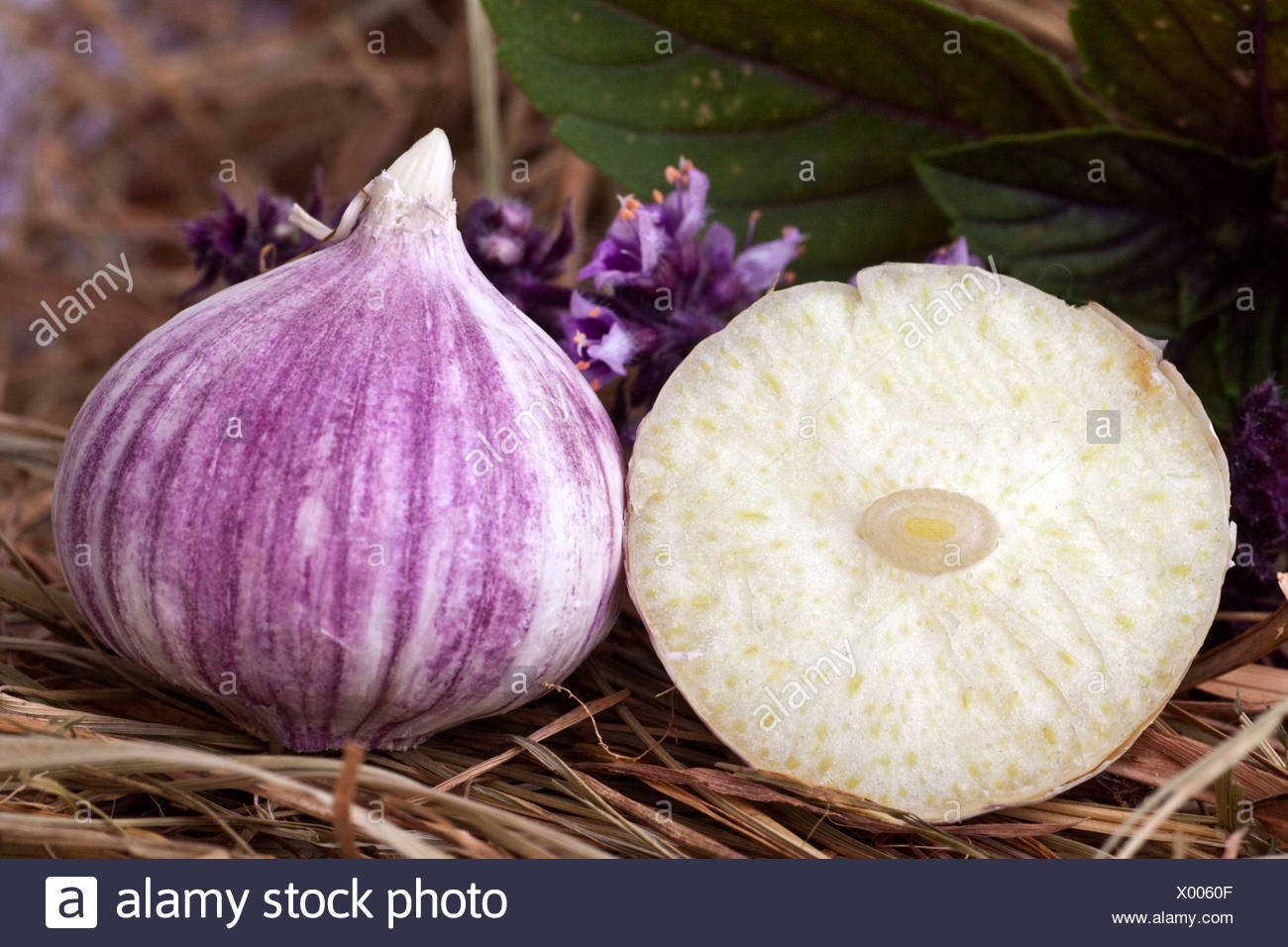 Elephant Garlic (Allium ampeloprasum), garlic variety - Stock Image