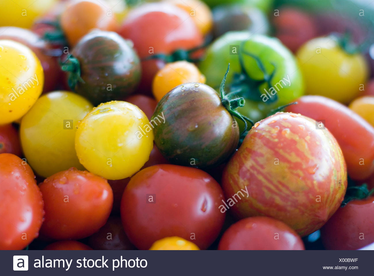 Tomato mixed varieties - Stock Image