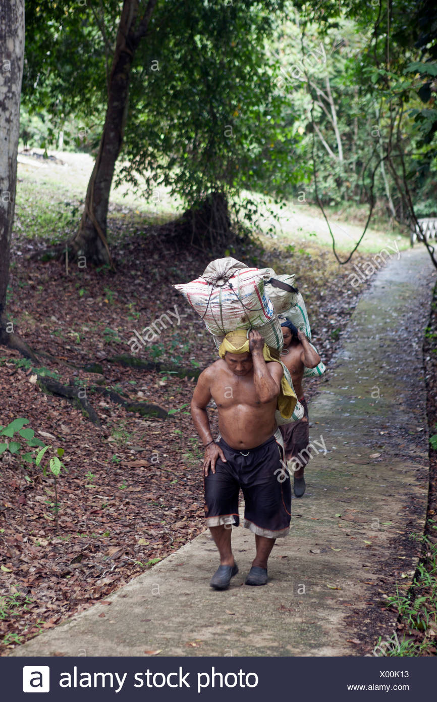 Malaysia, Borneo, Miri Forest, Farmers carrying bags - Stock Image