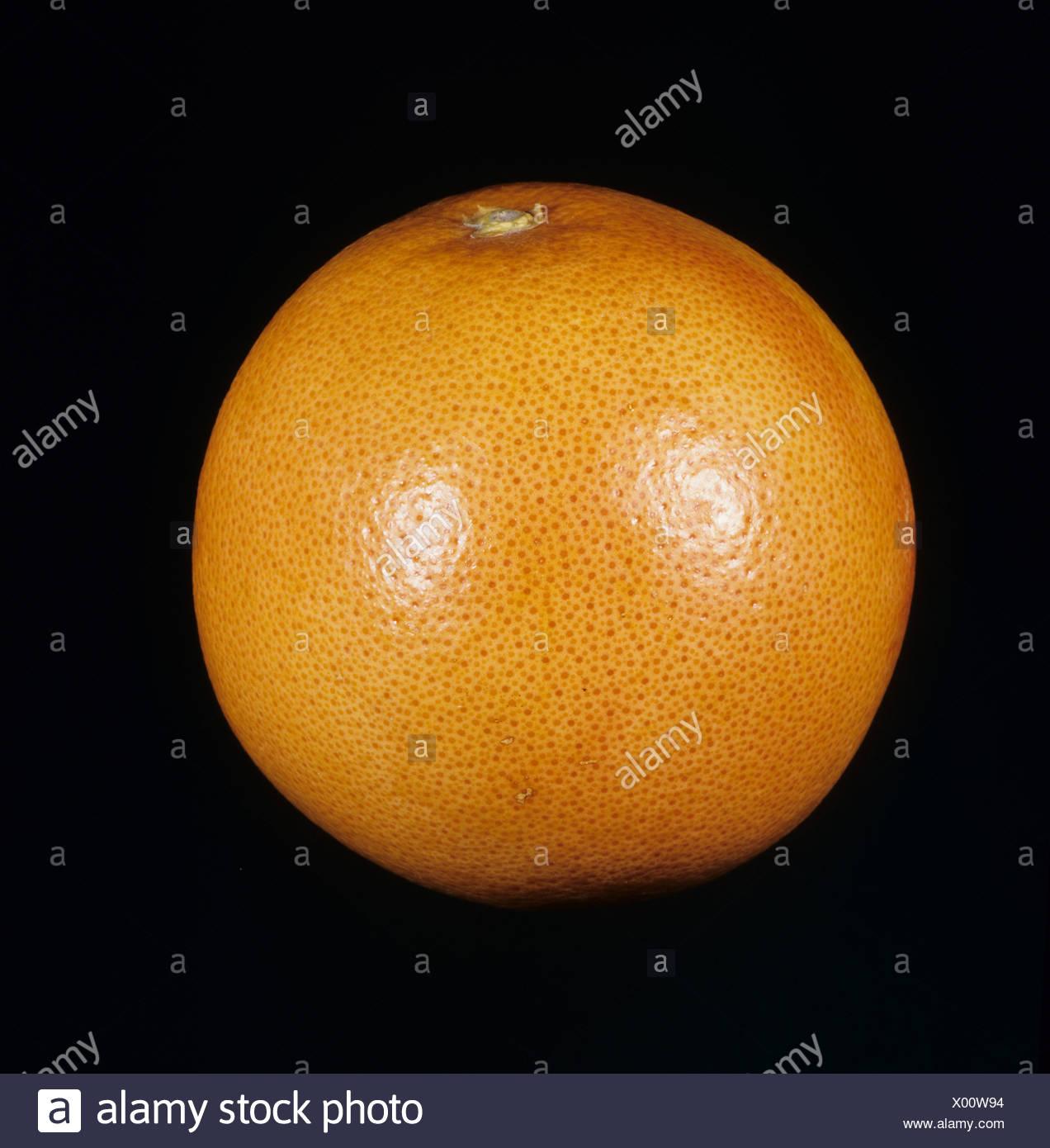 Whole grapefruit fruit variety Marsh Ruby - Stock Image