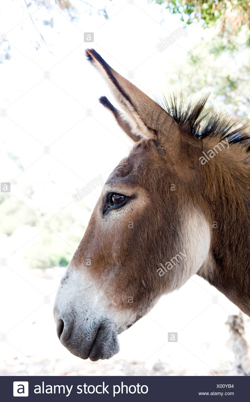 Close-up profile of a donkey against blurred background - Stock Image