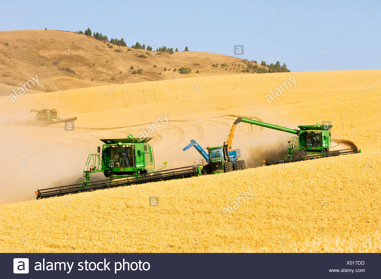 "Two combines harvest Soft White wheat on rolling hillside terrain while one combine unloads into a grain wagon ""on-the-go"" / USA - Stock Image"