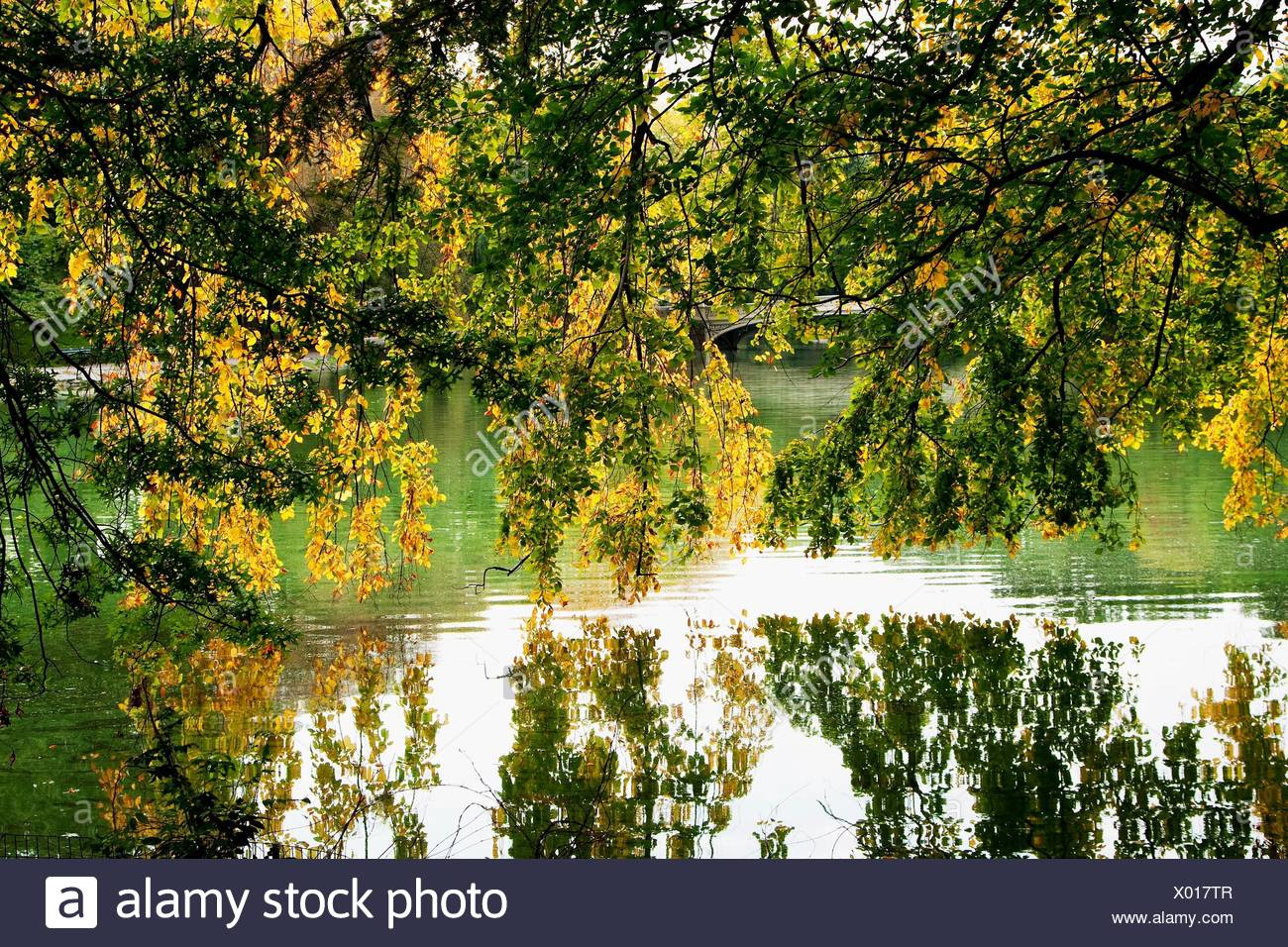 Beautiful green and yellow leaves hanging from tree branches over a ...