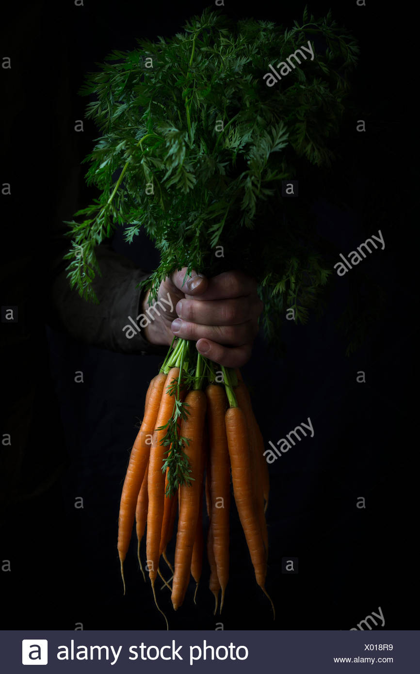 Bundle of carrots in hand - Stock Image