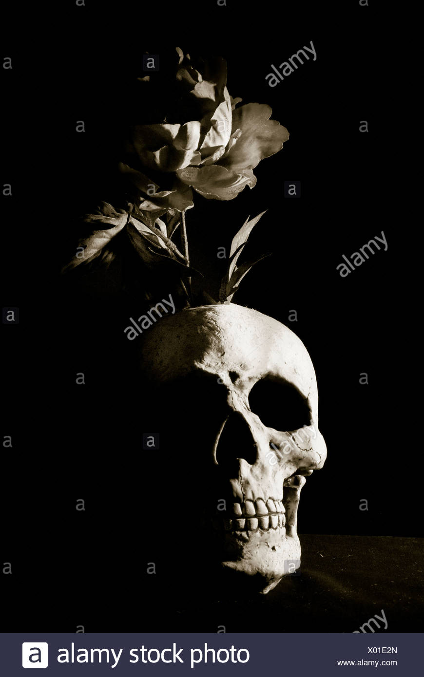 skull and rose - Stock Image